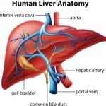 肝機能検査の結果を正しく理解するためのポイント
