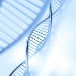 寿命を決める、サーチュイン遺伝子とテロメアDNA