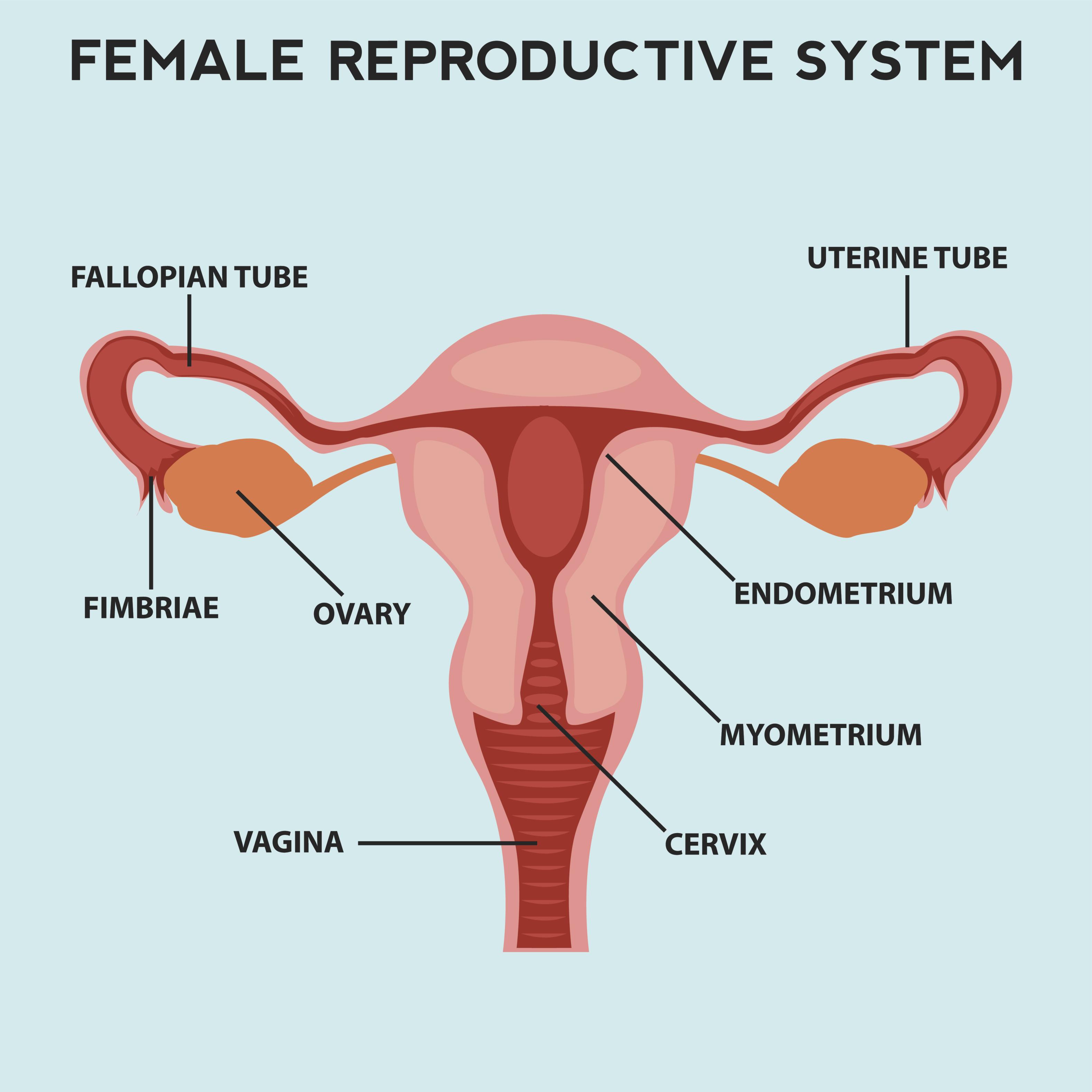 子宮 体 癌 検査