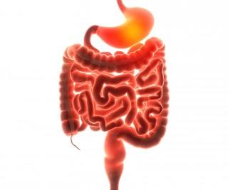 stomach organ pain 3d  illustration