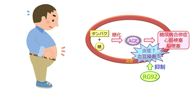 温泉藻類®RG92に期待される生活習慣病予防の効果
