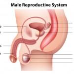精巣がんの検査方法と治療法