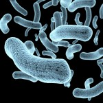 身体にとって敵にも味方にもなる「常在菌」とは?