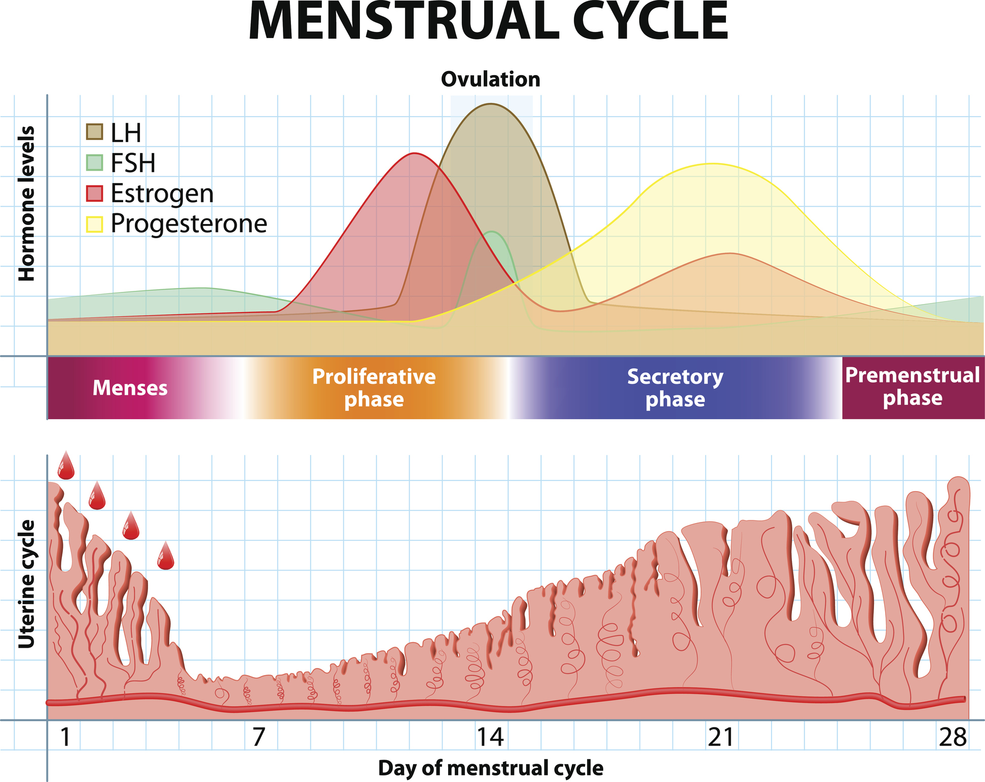 排卵 出血 毎月